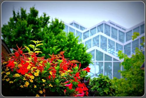 Japanese Garden 8
